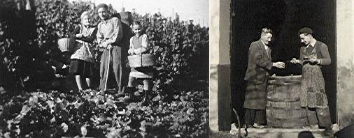 Geschichte des Weinguts